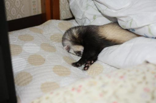 枕の横で寝んねのミッキー君1