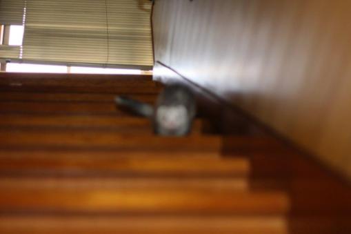 階段を降りるマルちゃん3