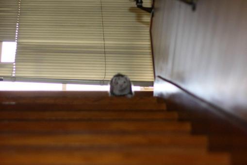 階段を降りるマルちゃん2