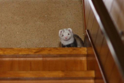 階段を降りるマルちゃん