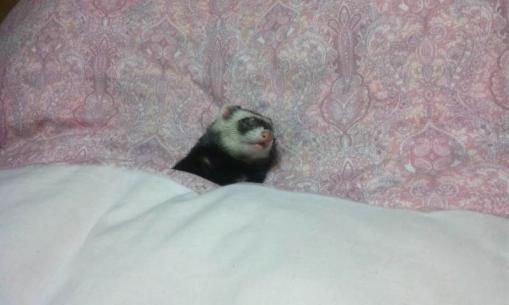 布団で眠るミッキー君1