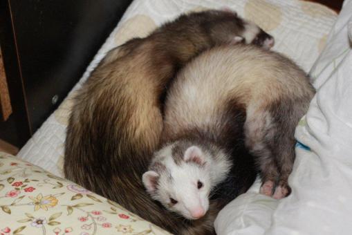 マルちゃんとミッキー君の寝んね