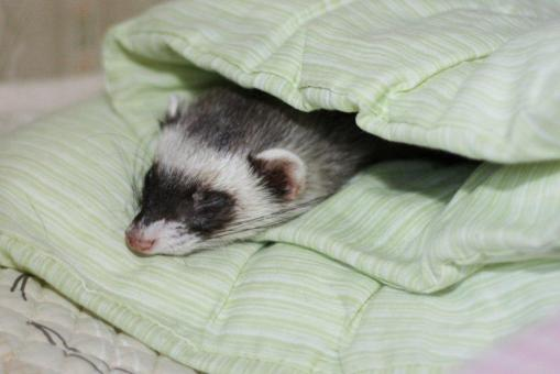 布団で眠るミッキー君