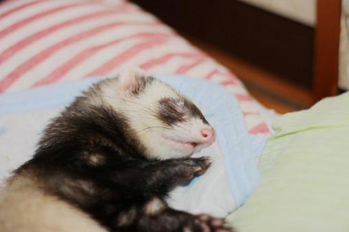 枕の横で眠るミッキー君