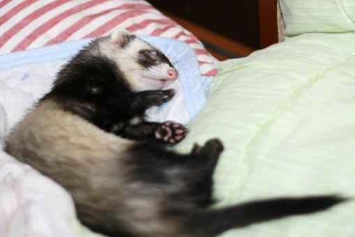 枕の横で眠るミッキー君1