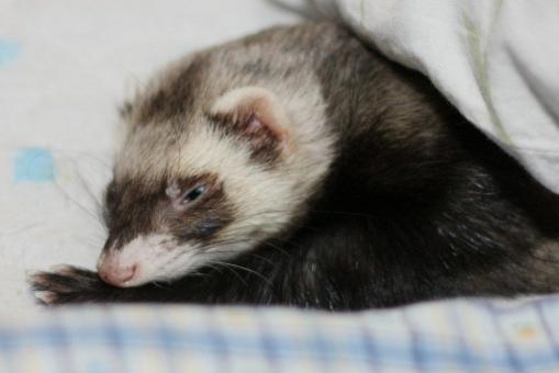 枕の横で寝んね