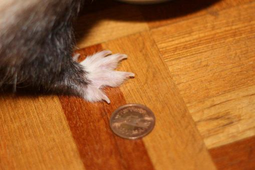 マルちゃんの大きな足