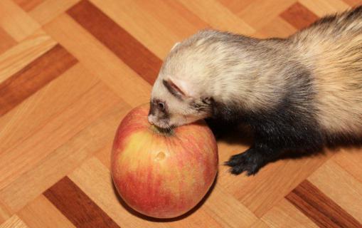 ミッキー君とリンゴ