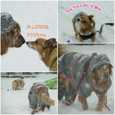 2013クララちゃんと雪の日 1月14日