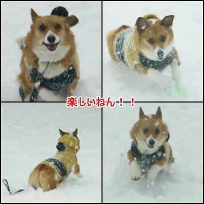 雪の日 2013年