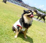bestof_koitaro4.jpg