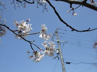 2011_0413三日月豆0006