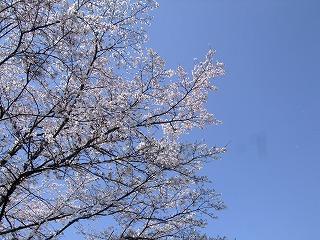 2011_0413三日月豆0003