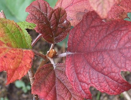 鉢植と落ち葉の紅葉1