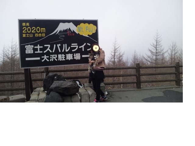 snap_kokozenbiyori_201241165730.jpg