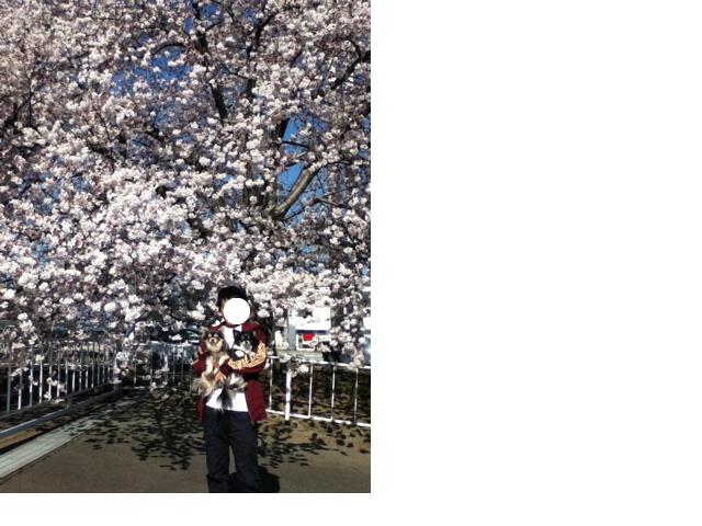snap_kokozenbiyori_201243163547.jpg