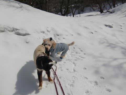 鳥取雪遊び