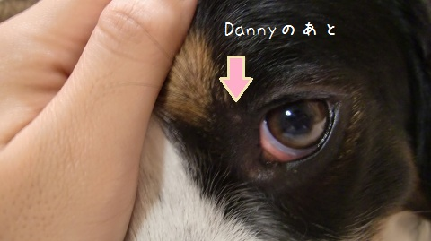 Dannynoato.jpg