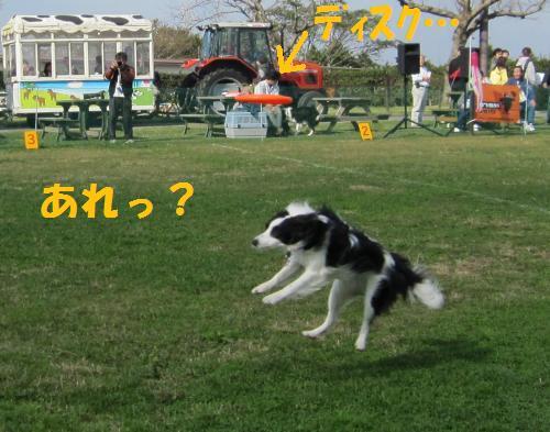 IMG_5214_convert_20111114210922.jpg