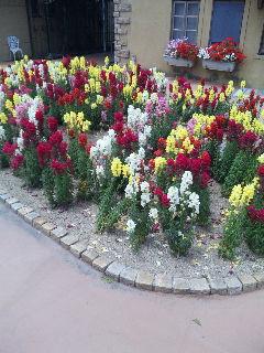 綺麗な御花畑