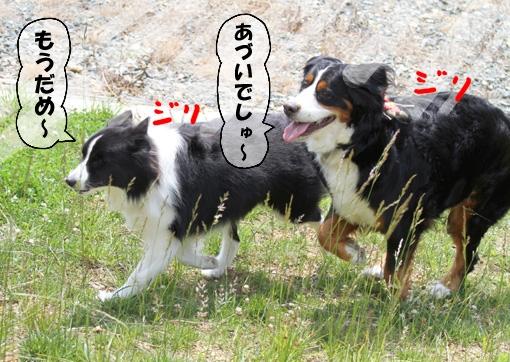 20100530-106.jpg