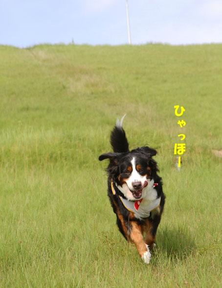 20100815-108.jpg