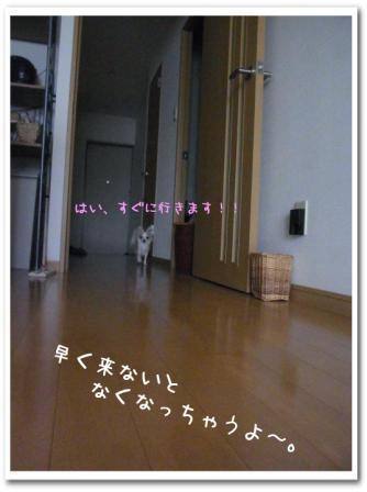 5qAM1[1]