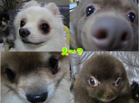 2魚眼レンズ-2