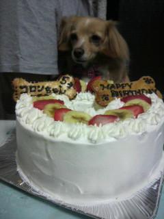ころんちゃんBDケーキ