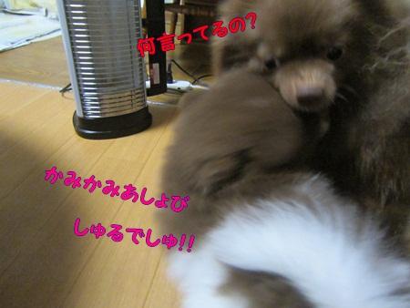 IMG_0349.jpg
