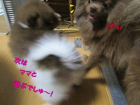 IMG_0352.jpg