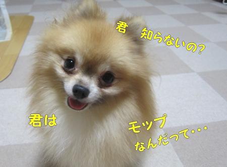 IMG_3762.jpg