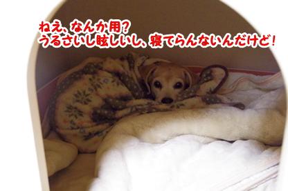 犬部屋 1