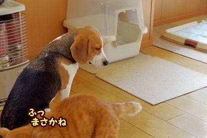 トイレ 5