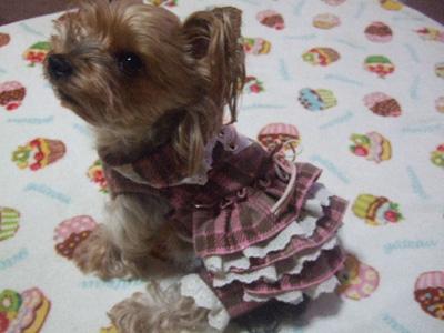 burochekku2_20101008053414.jpg