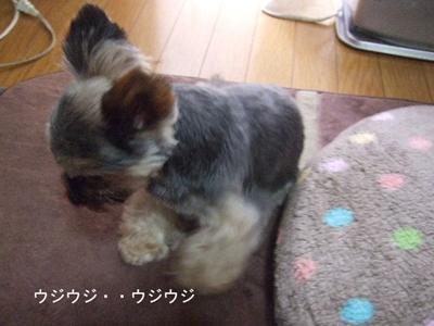 burokote2_20101017102336.jpg