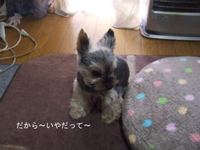 burokote3_20101017102337.jpg