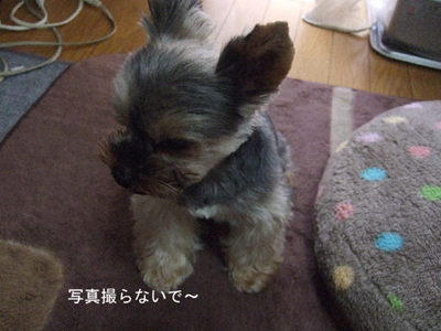 burokote4_20101017102338.jpg