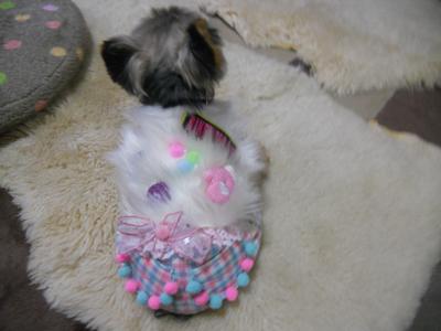 burokote_20101125015013.jpg