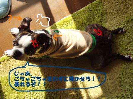 100331_7.jpg