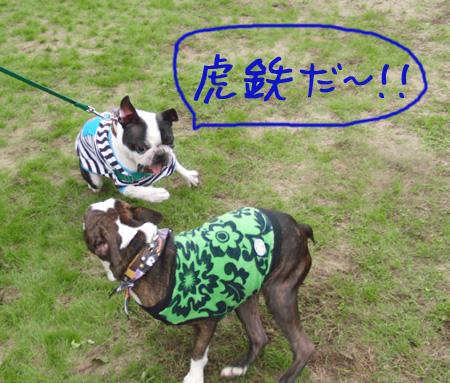 kote_3.jpg