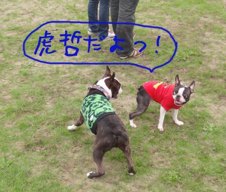 kote_5.jpg