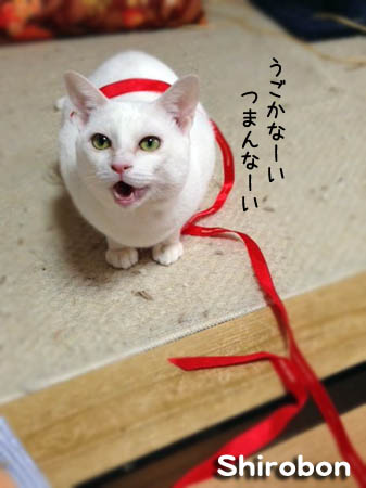 しろぼん2014.1