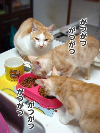 子猫といも2014.9.20