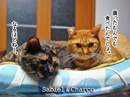 サビエル&ちゃーこ2014.10