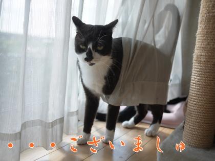101_convert_20131231002442.jpg