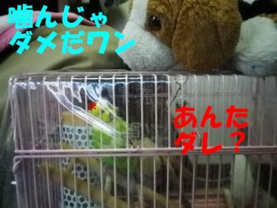 itigo3_20110131151344.jpg