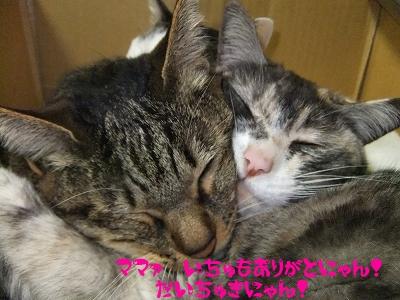 koto&shiro