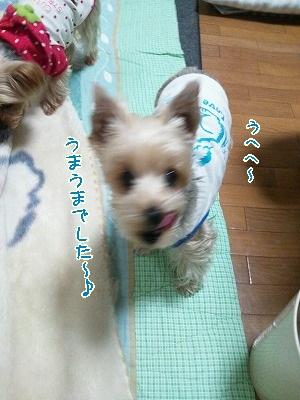 DSC_0018_20111208033427.jpg