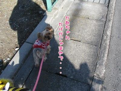 IMG_0101_20120205162942.jpg